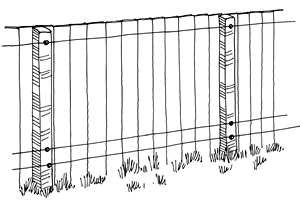 Drawing of a fence with electric wires at the top and bottom.